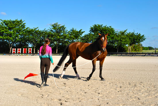 horsemanship training
